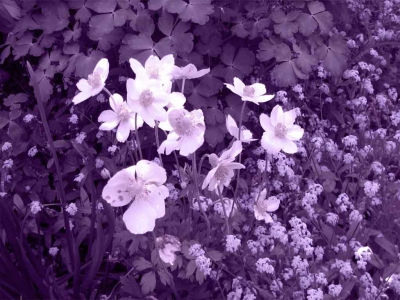 Purple Mothers Day Background