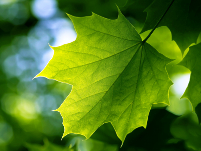 Shadow Green Leaf Wallpaper Hd