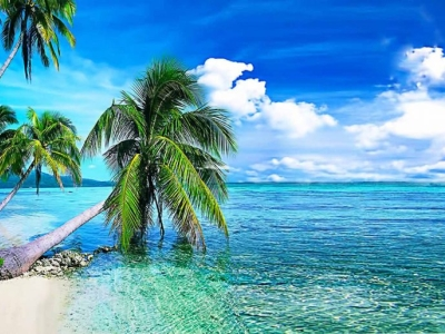 Summer Background, Tropical Beach With Palmi Images