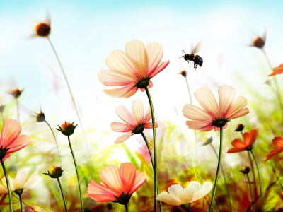 Summer Holiday And Flowers Background