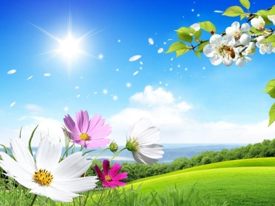 Summer Transparent Background Picture
