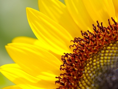 Sunflower Colorful Wallpaper