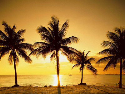 sunset palm trees wallpaper #13025