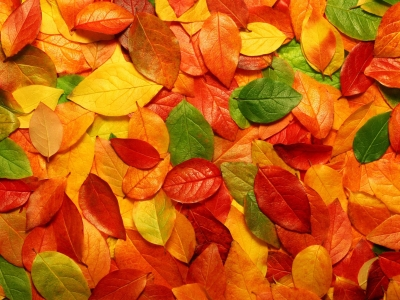Wallpapers Autumn Leaves Picture