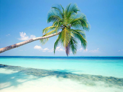 beach, sky, palm trees wallpaper background #13023