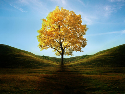 Yellow Tree Wallpaper