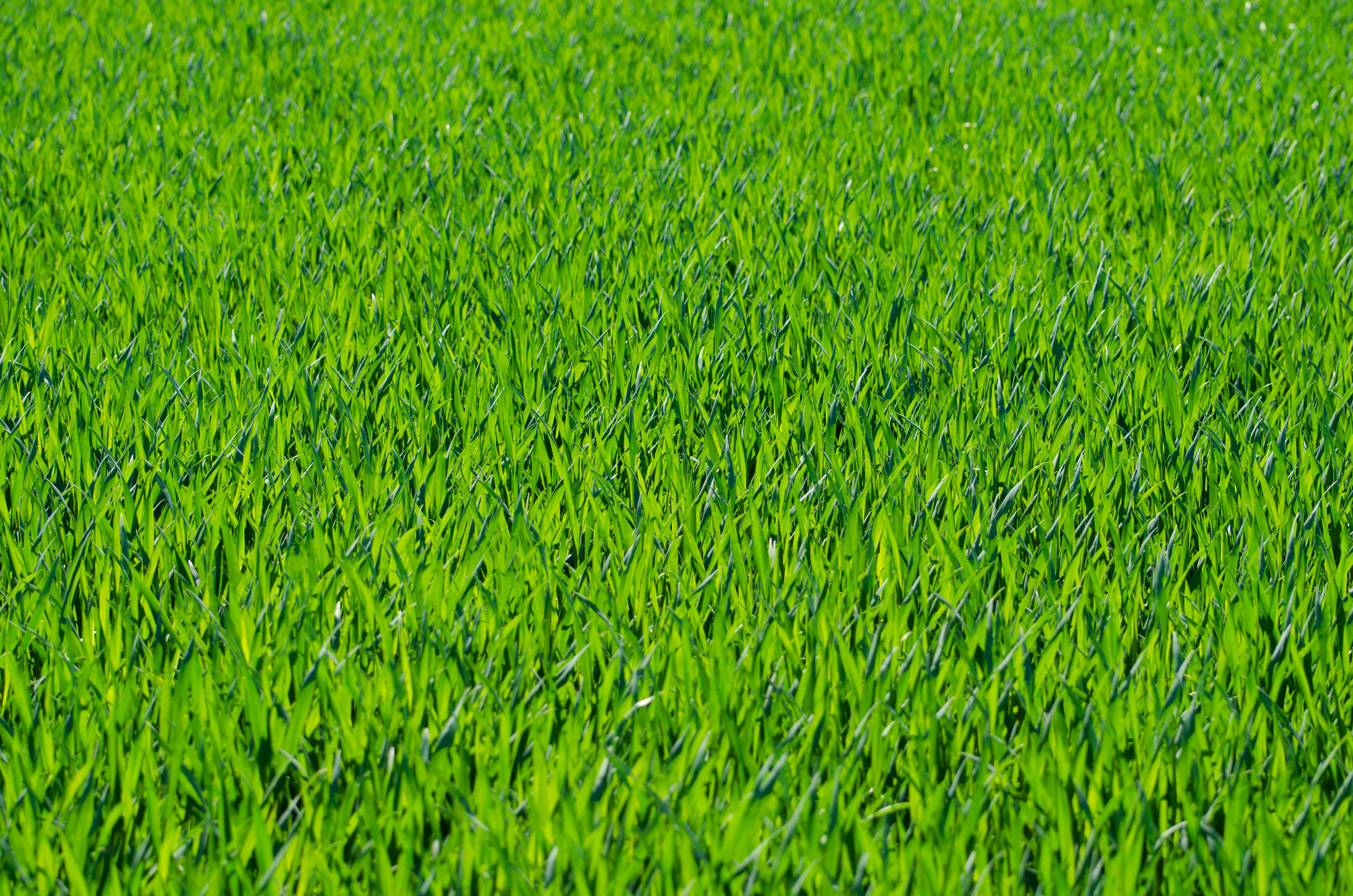 Green Grass Background Seven  Grass Textures Or Lawn Background
