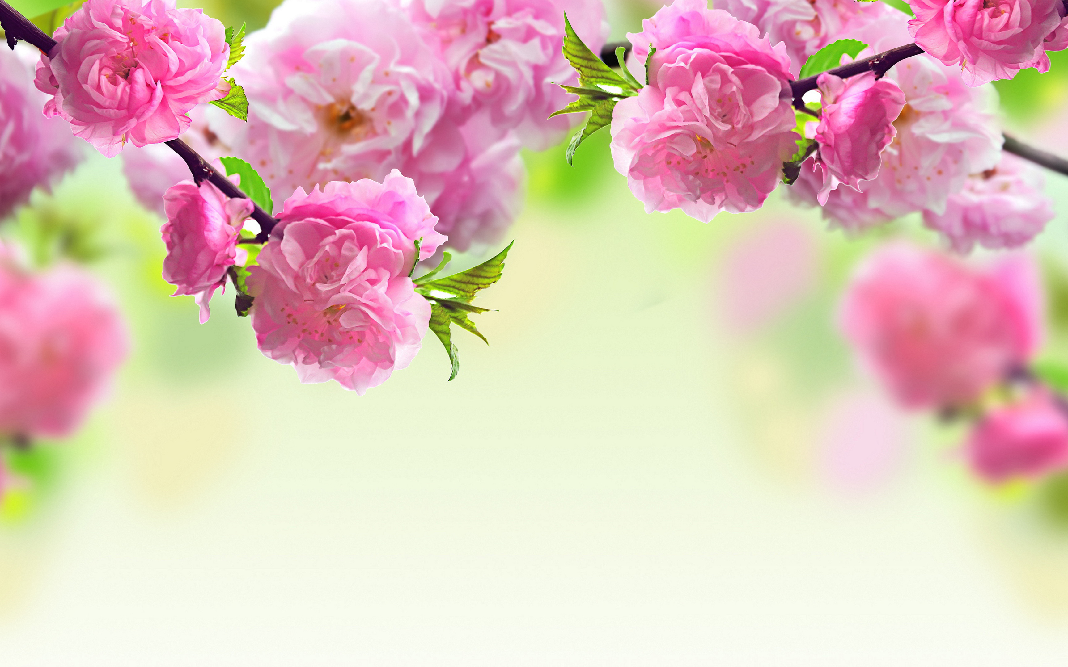 Spring flowers background Wallpapers Pictures Photos Images #3820