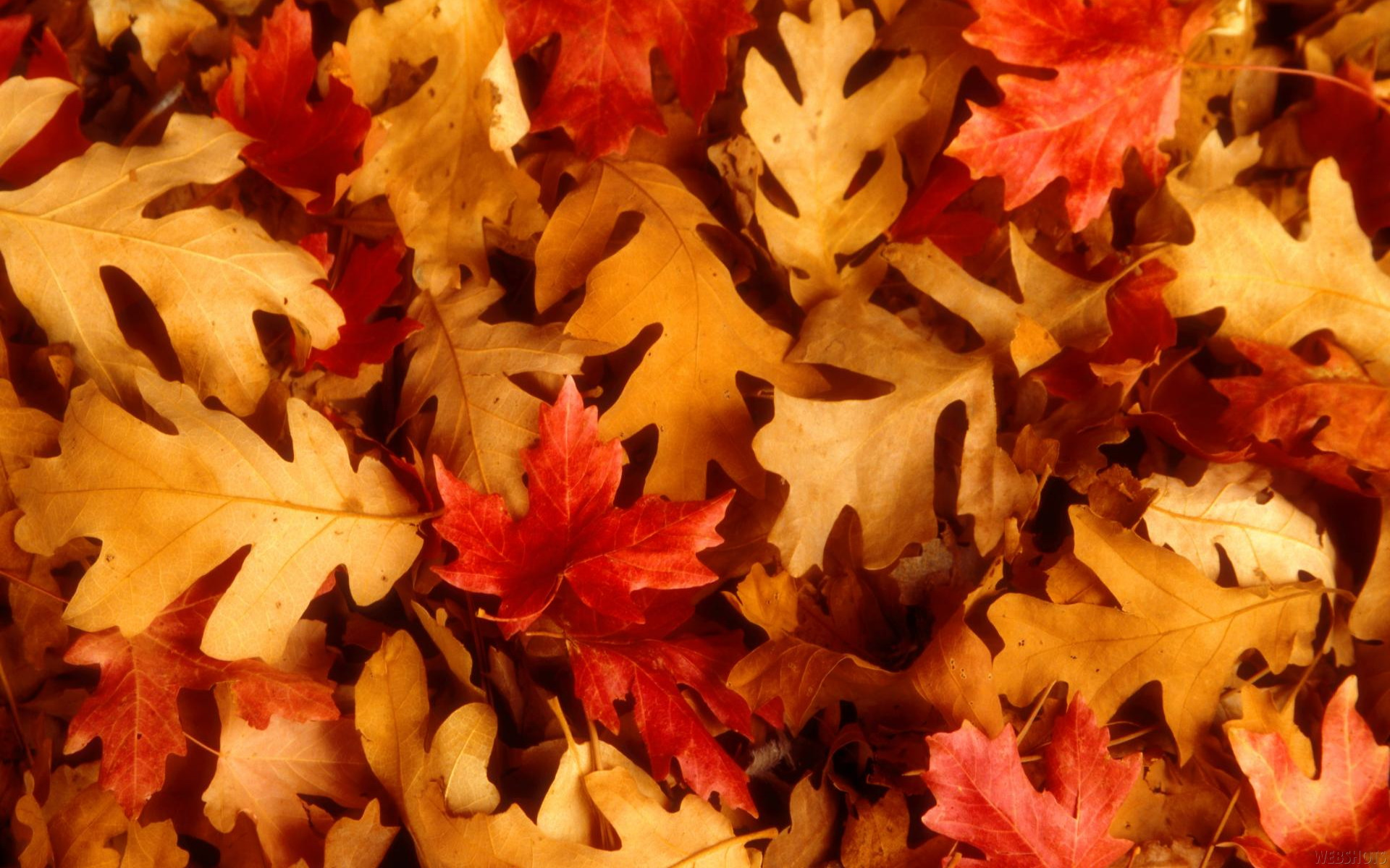 Fall Leaves Background Powerpoint Backgrounds For Free