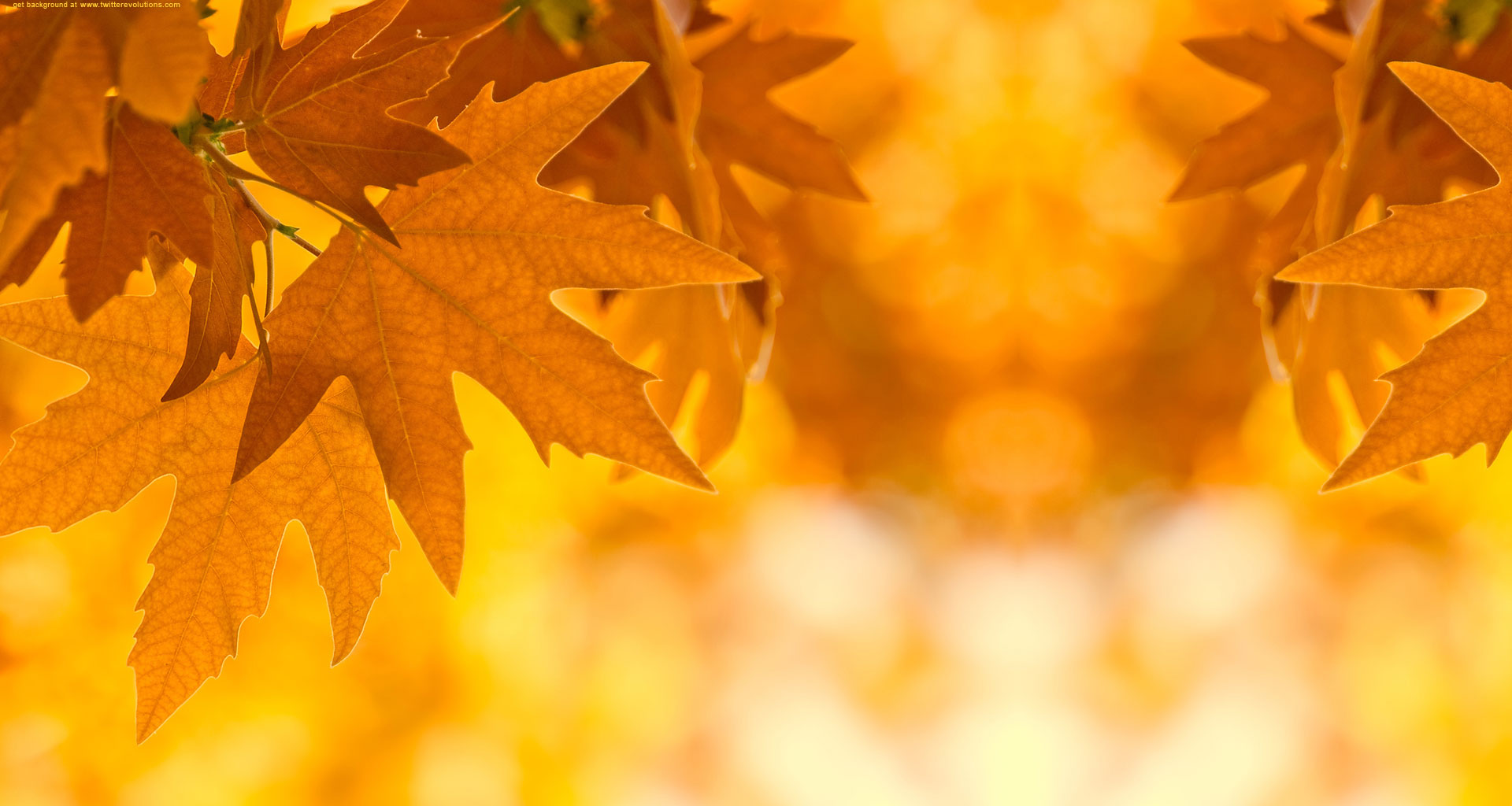 Autumn Leaves Twitter Background Backgrounds ~ Fall Leaves Background