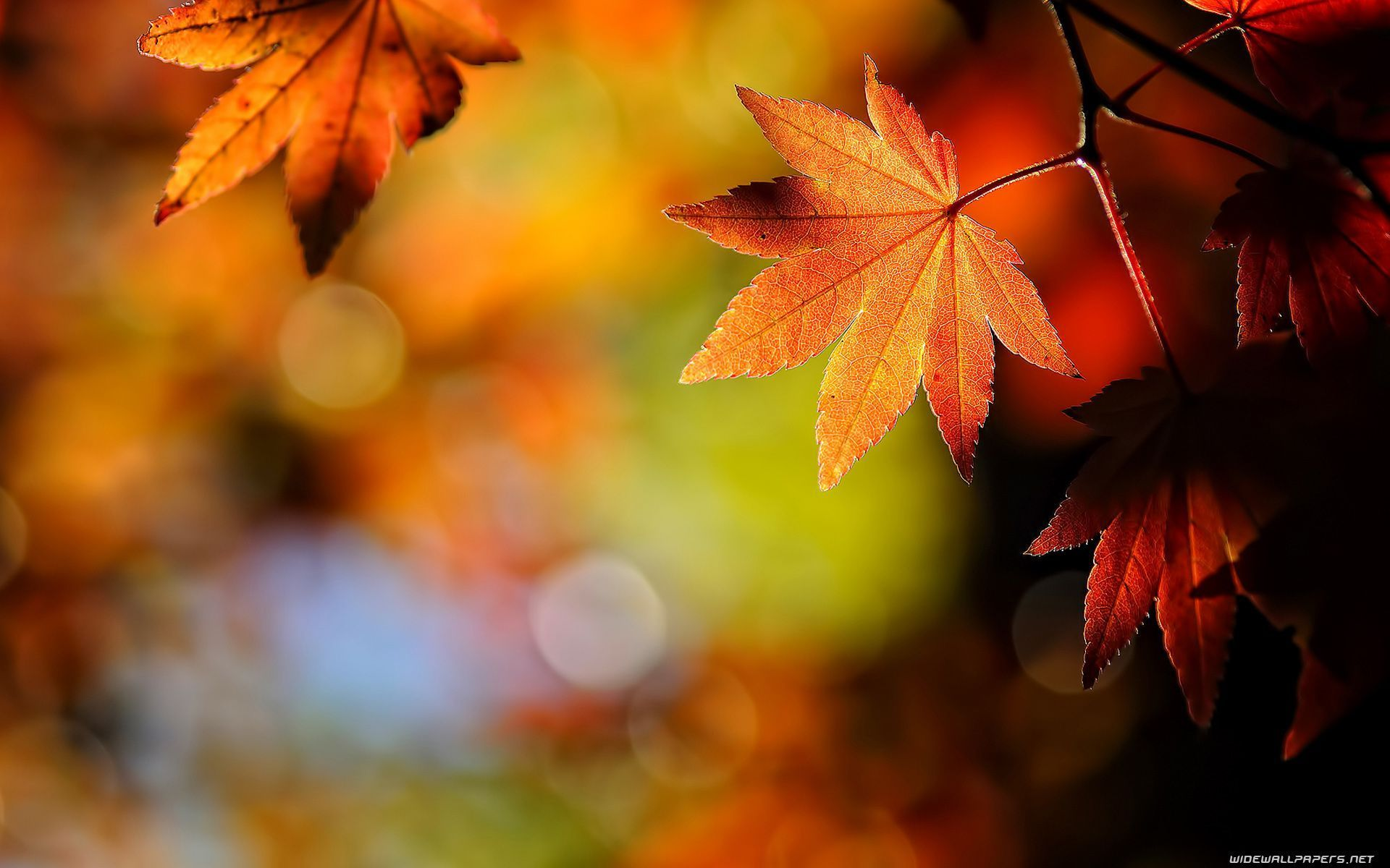 Wallpapers For > Fall Leaves Desktop Background Hd
