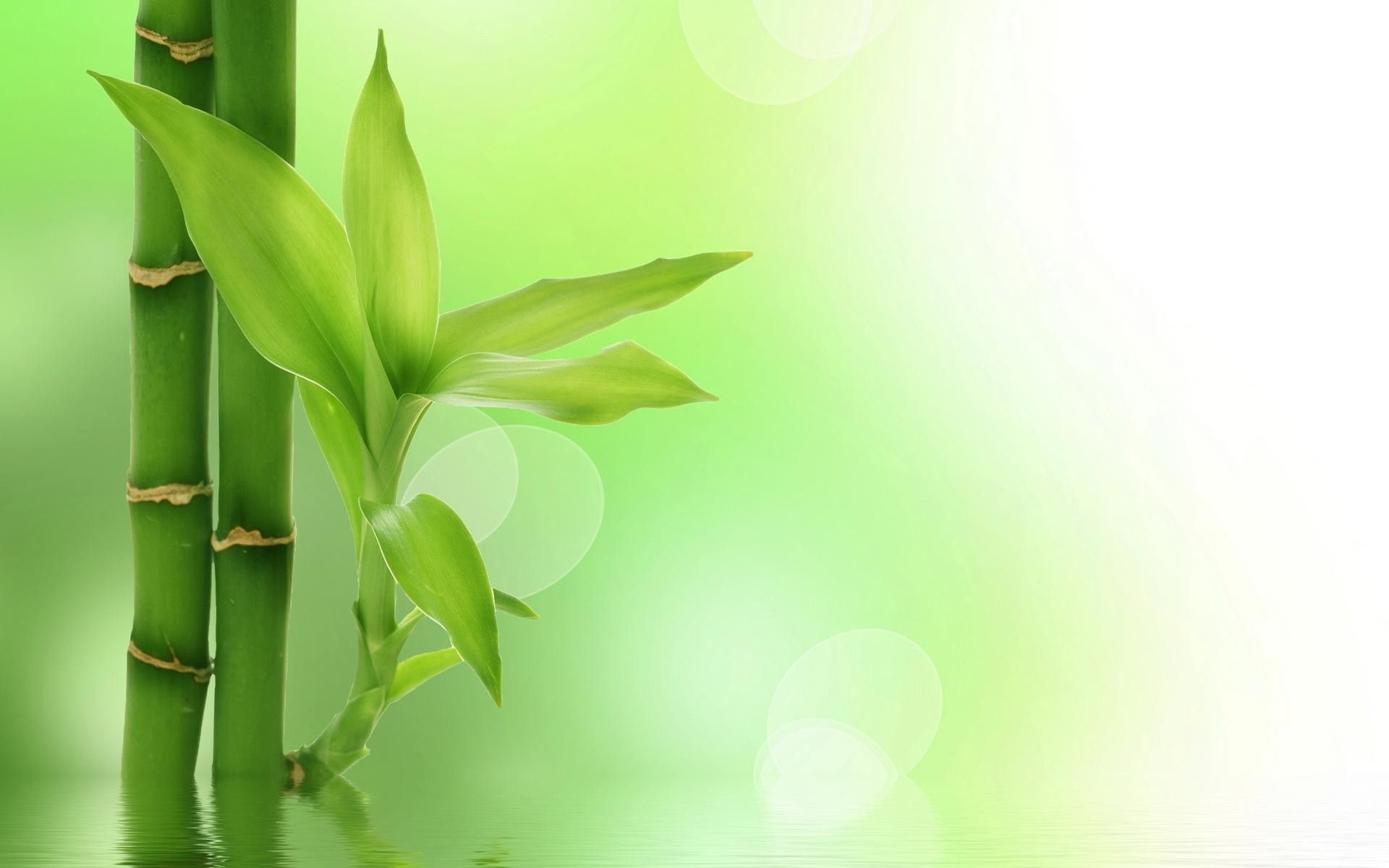 powerpoint background bamboo