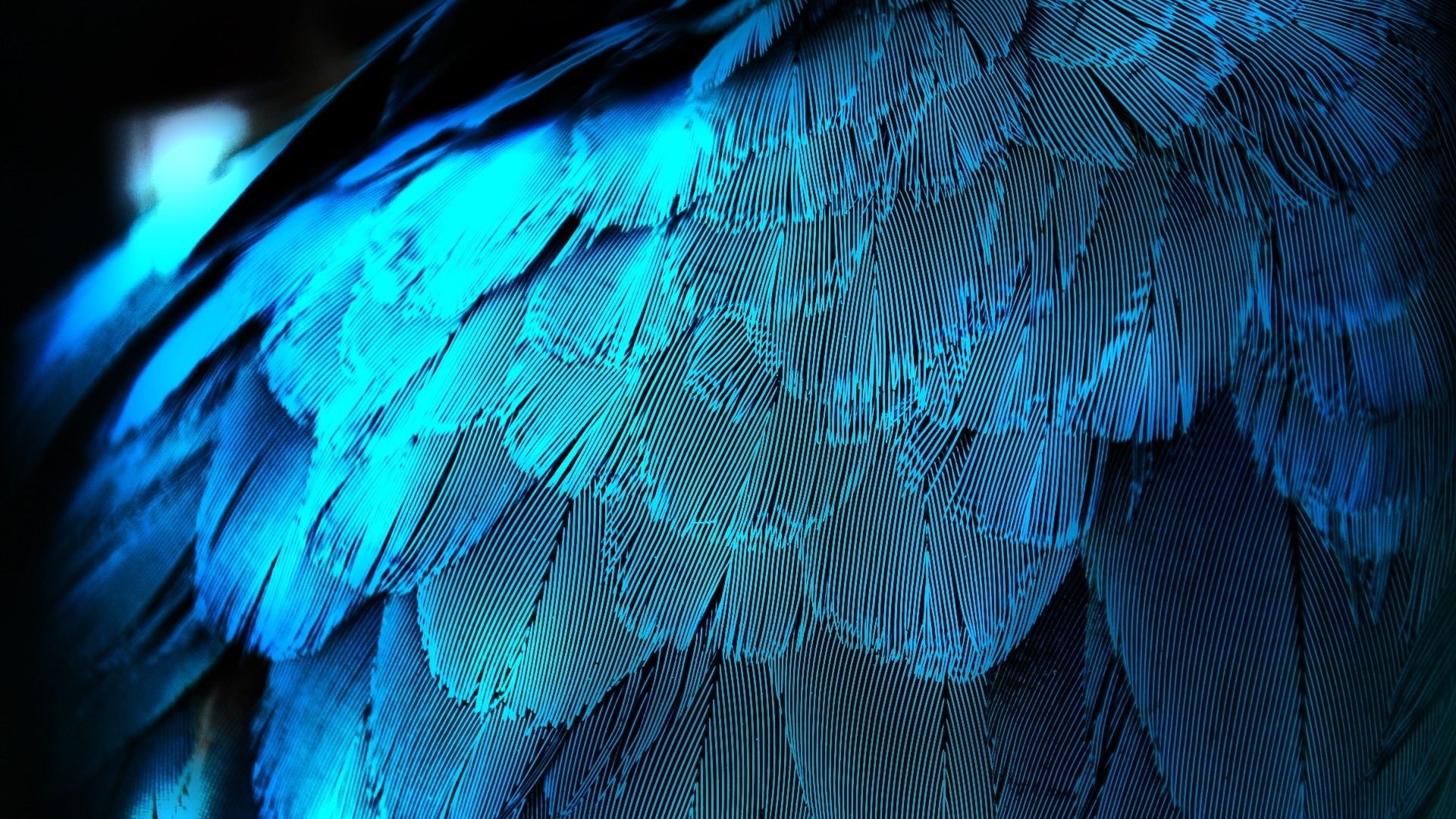 electric blue feathers desktop feather background