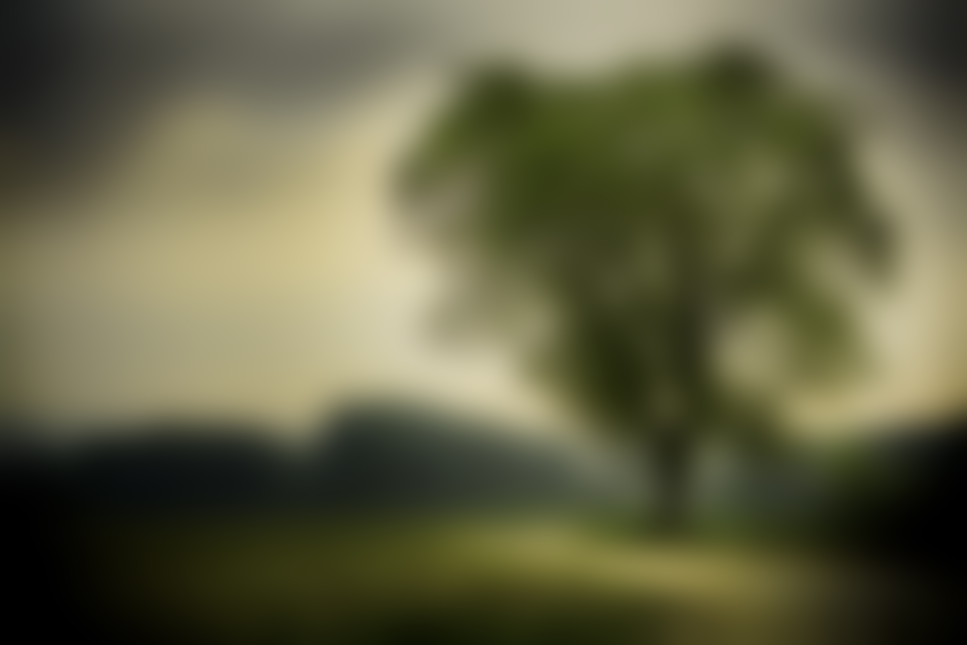 Nature tree blurry background #1060