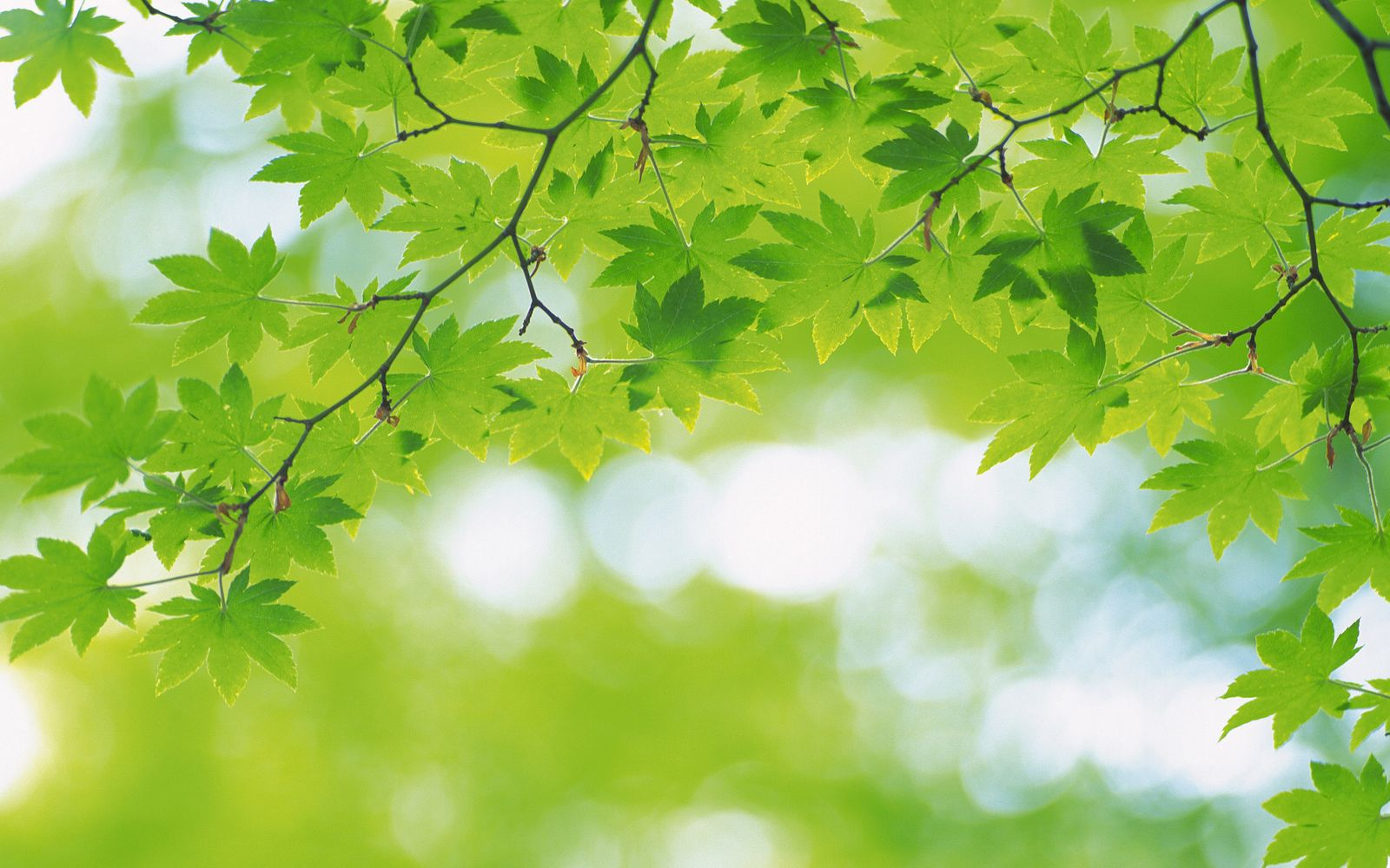 simple green leaves and green background