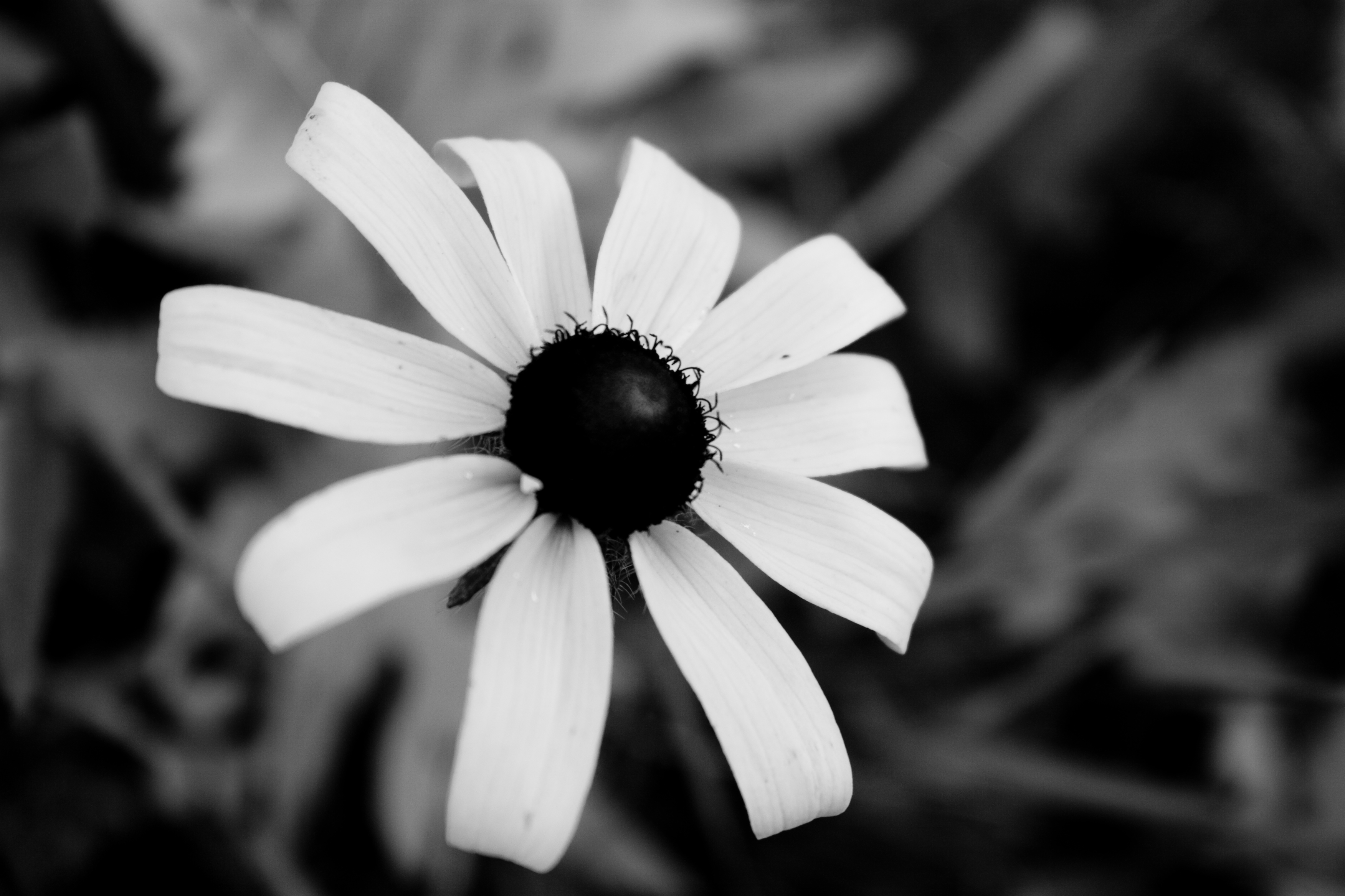 The Beauty Of Flowers Black White