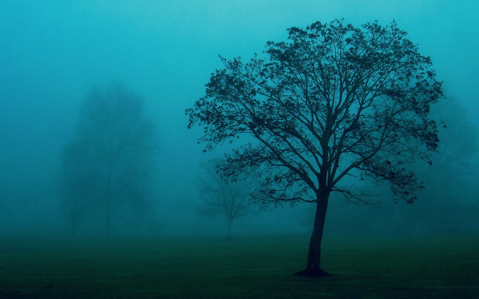 trees in the mist wallpaper